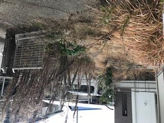 木の伐採35